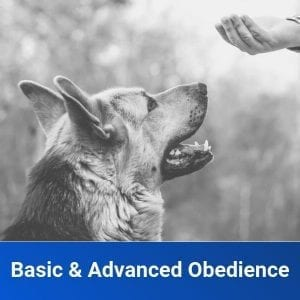 Basic & Advanced Obedience