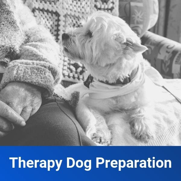 Therapy Dog Preparation
